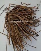 CHIRAYATA MOOL, Chiretta, Swertia Chirata, Raw Whole Herbs of India