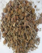 GORKHMUNDI SEED, Sphaeranthus Indicus, Raw Whole Herbs of India