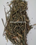 KALMEGHA, Androgaphis Paniculata, Raw Whole Herbs of India