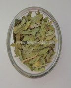 sonamukhi herb | senna herb | herbs for indigestion